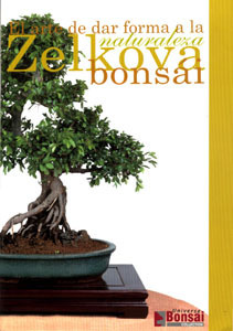Guia bonsai zelkova