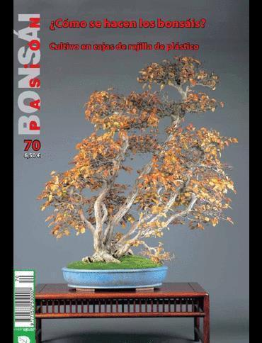 Bonsai Pasion Nº70