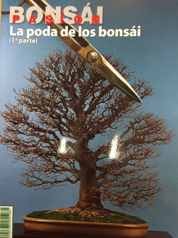 Bonsai Pasion Nº 80