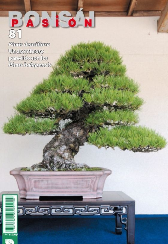 Bonsai Pasion Nº 81