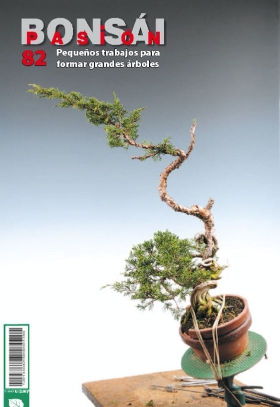 Bonsai Pasion Nº 82