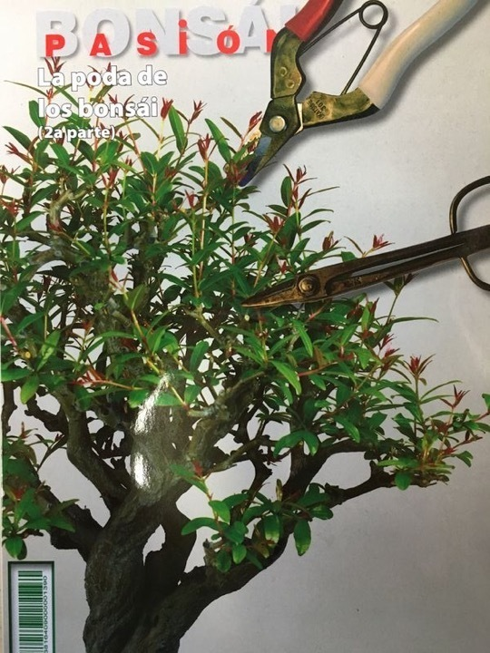 Bonsai Pasion Nº 83