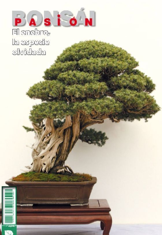 Bonsai Pasion Nº 84